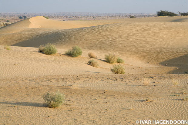 5 Beautiful Deserts Of Pakistan You Should Know About ...