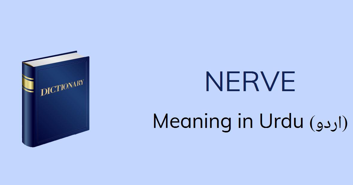 Nerve Meaning In Urdu - Nerve Definition English To Urdu